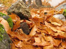Free Autumn 3 Royalty Free Stock Photography - 182727