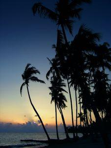 Free Tropical Sunset Stock Photos - 184333