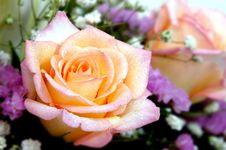 Free Cream Rose Stock Photo - 184660