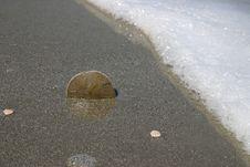 Free Sand Dollar In The Surf Royalty Free Stock Photos - 186118