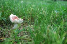 Free Mushroom On The Lawn Stock Image - 186701