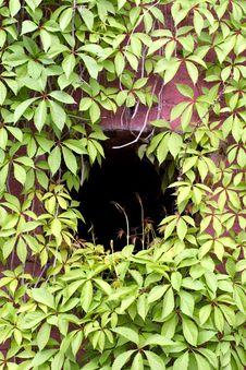 Green Hole Stock Photos