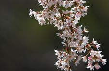 Free Blossom Tree Stock Images - 187014