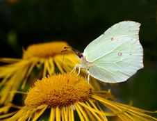 Free Butterfly Stock Photo - 187370