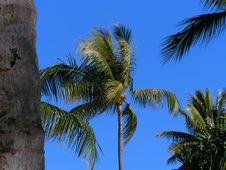 Free Palm Tree Stock Photo - 188140