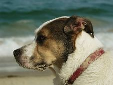 Profile Of A Dog S Face At The Beach Stock Image