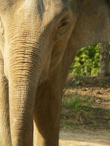 Free Close Crop Of Asian Elephant Royalty Free Stock Image - 188296