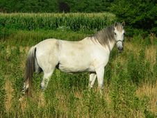 Free Beautiful Gray Horse, Horizontal Full Profile Stock Images - 188344