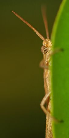 Free Peeking Grasshopper Stock Photos - 188763