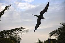 Free Cormorant Stock Image - 1800011
