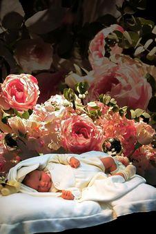 Free First-born Stock Photos - 1800363