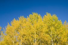 Yellow Leaves And Blue Sky Royalty Free Stock Images