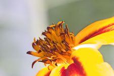 Free Orange Flower Interior Royalty Free Stock Image - 1802096