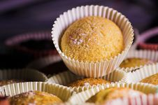 Free Vanilla Cupcakes Stock Photos - 1802343