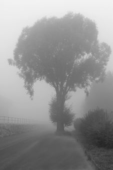 Free Big Tree On A Street With Haze Royalty Free Stock Image - 1802736
