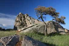 Free Tree On The Rock Stock Photography - 1806152