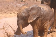 Baby Elephant Splash