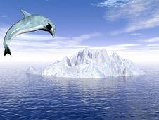 Free Dolphin_Ice Stock Photography - 1807372