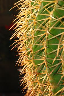 Golden Barrel Cactus Profile Stock Photos