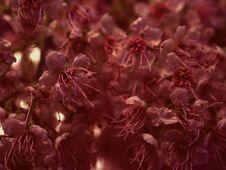 Dark Flower Petals Texture Royalty Free Stock Photos