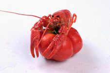 Free Lobster On A Tomato Stock Images - 1809244