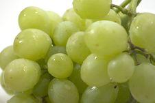 Free Grapes Royalty Free Stock Photos - 1809408