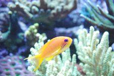 Free Orange Yellow Purple Stock Photography - 1809412