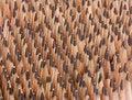 Free Sharp Wooden Pencils Royalty Free Stock Photo - 18000235