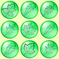 Free Leaves Of Plants, Buttons, Set Royalty Free Stock Images - 18003049