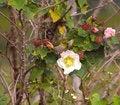 Free Pretty Bird With White Eye Stock Photography - 18003272