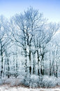 Free Frozen Forest Royalty Free Stock Photography - 18008217