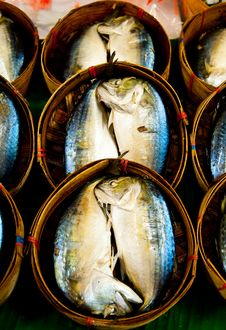 Free Mackerel Stock Photography - 18000112