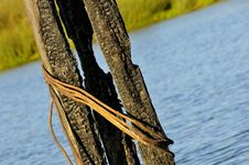 Free Burned Pier Posts In Waterway Stock Photos - 18000173