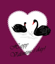 Free Postcard With Two Black Swans Royalty Free Stock Photography - 18000687