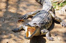 Free Crocodile Farm In Thailand. Royalty Free Stock Photos - 18003538