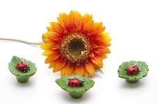 Free Ladybird Stock Image - 18004051