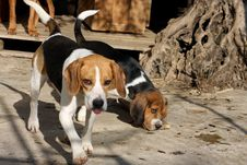 Free Crazy Dogs Royalty Free Stock Images - 18004489