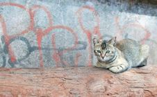 Free Lonely Cat Royalty Free Stock Images - 18004769