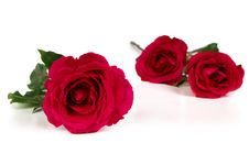Free Three Red Roses Royalty Free Stock Image - 18005676