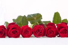 Free Red Roses Royalty Free Stock Photography - 18008187