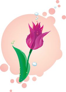 Free Illustration Of Lilac Tulip Stock Photos - 18008513