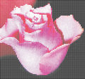 Free Digital Rose Stock Images - 18015664