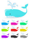 Free Color Whale Stock Images - 18016124