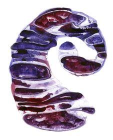 Free Spiral Stock Image - 18011381