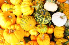 Free Small Pumpkin Stock Photography - 18014232