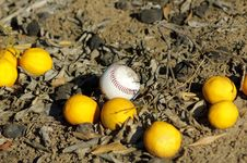 Baseball Ball And Oranges On Ground