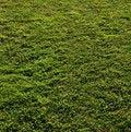 Free Grass-221 Stock Photos - 18028473