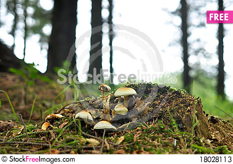 Free Group Of Mushrooms Growing Wild In Forest Stock Photos - 18028113