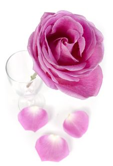 Free Pink Rose And Petals Stock Photo - 18024460