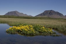 Beautiful Summer Picture In Iceland Royalty Free Stock Image